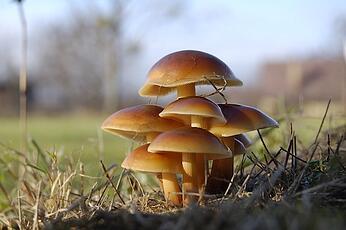 Mushrooms used in packaging