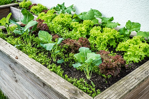 Growing Your Own Food Organically